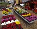 Chryzantémy hrnkové