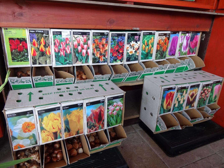tulipány cibule volné
