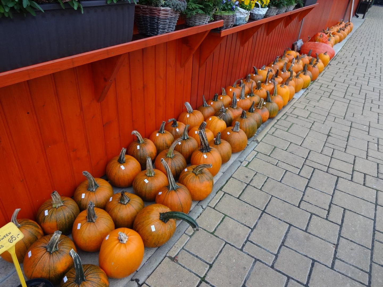 dýně Halloween01