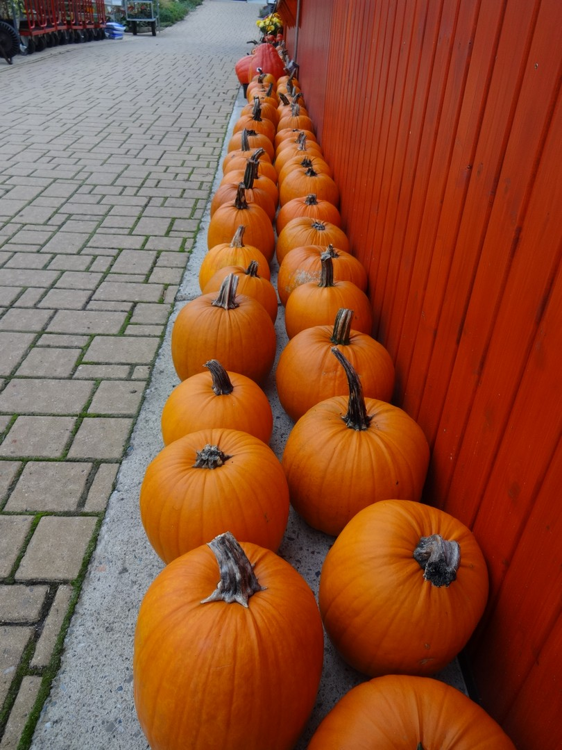 dýně Halloween03