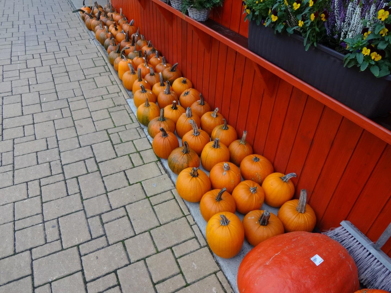 dýně Halloween04