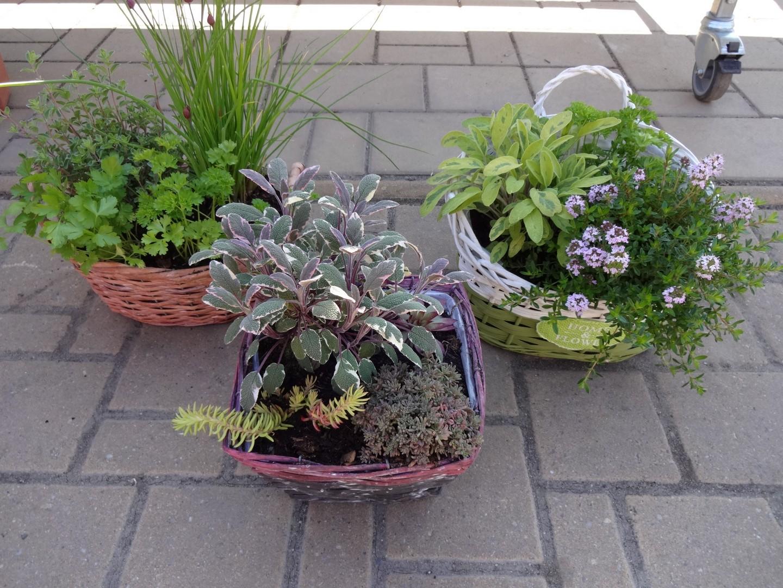 koše s bylinkami
