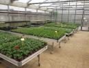 2016 pěstební stoly ve skleníku