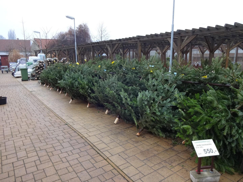 vánoční stromky prodej