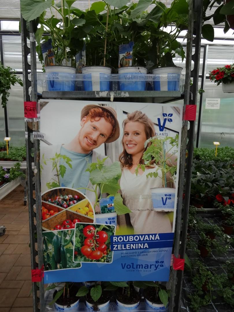 roubovaná zelenina01
