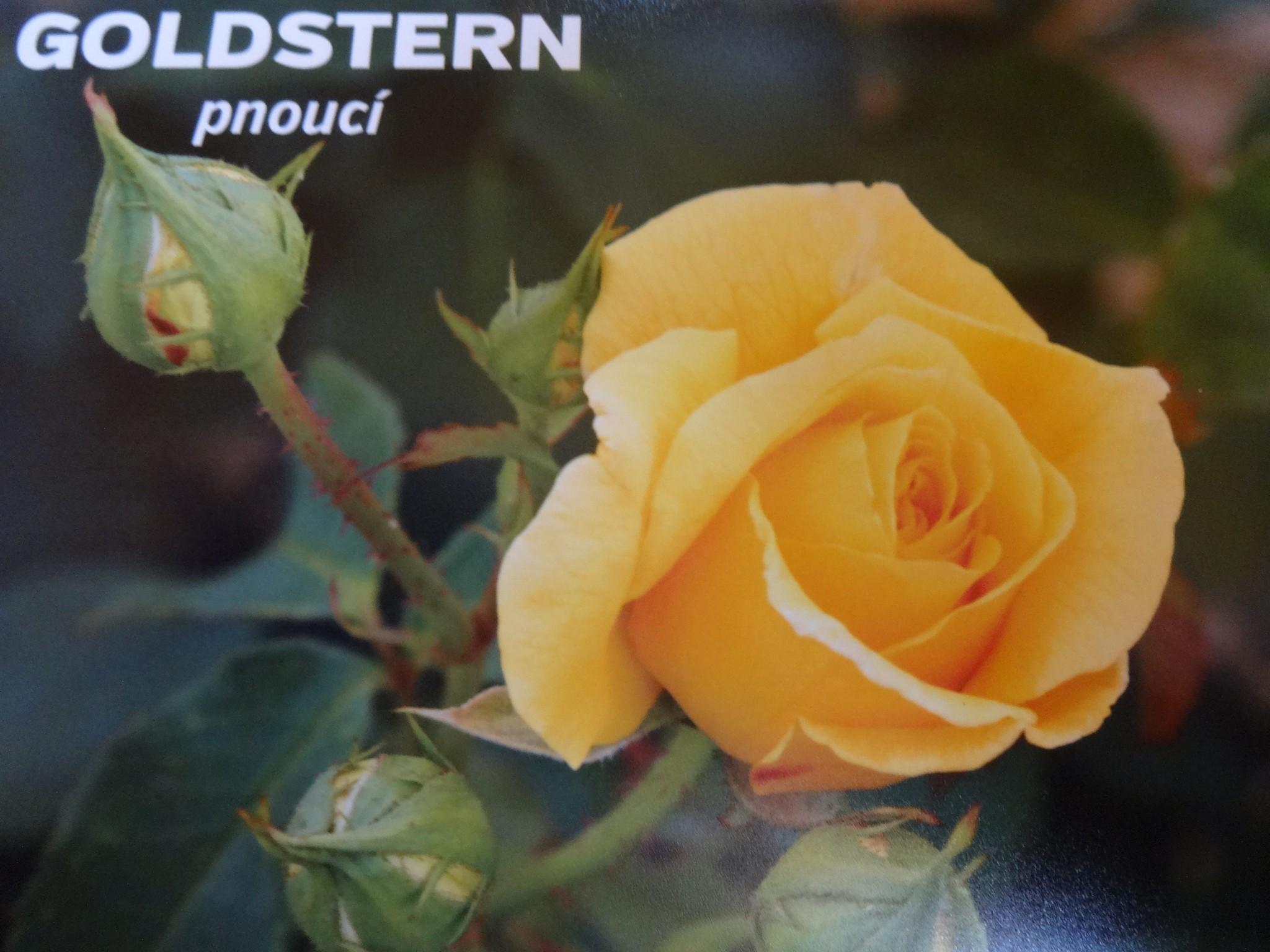 nabídka růží