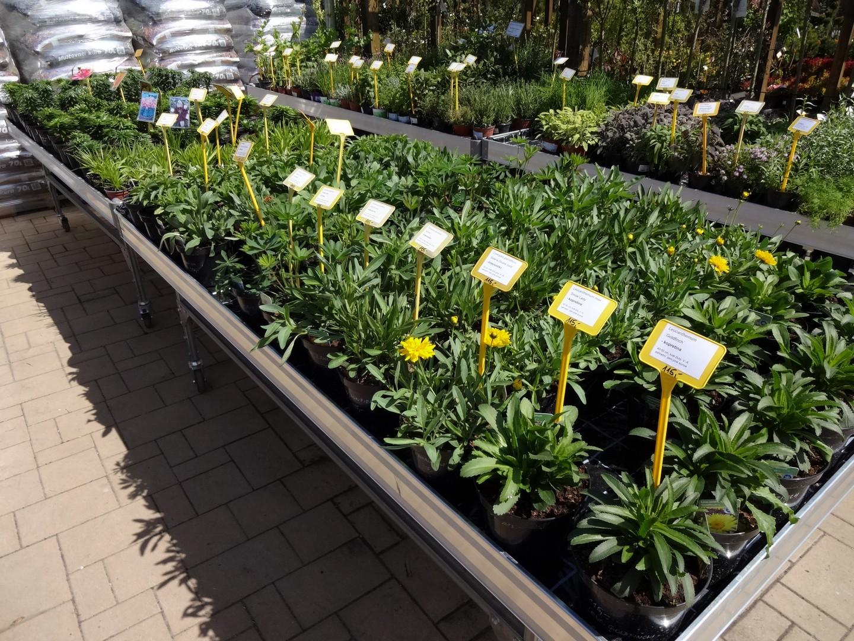 luxusní trvalky ve třílitrových květináčích